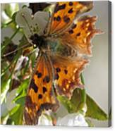Satyr Comma Canvas Print