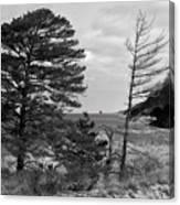 Saugatuck State Park In November Canvas Print