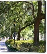 Savannah Benches Canvas Print