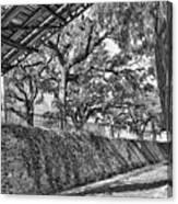 Savannah Perspective - Black And White Canvas Print