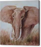 Savannah Queen  Canvas Print