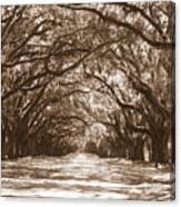 Savannah Sepia - Glorious Oaks Canvas Print