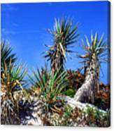 Saw Palmetto Canaveral National Seashore Canvas Print