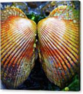 Scallop - Close Up Canvas Print