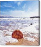 Scallop Shell On The Beach - Impressions Canvas Print