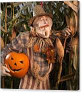 Scarecrow With A Carved Pumpkin  In A Corn Field Canvas Print