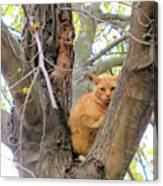 Scared Up A Tree Canvas Print