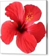 Scarlet Hibiscus Tropical Flower  Canvas Print