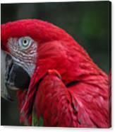 Scarlet Macaw Canvas Print