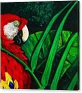 Scarlet Macaw Head Study Canvas Print