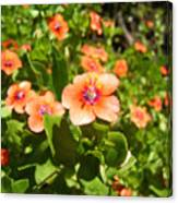 Scarlet Pimpernel Flower Photograph Canvas Print