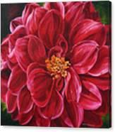 Scarlet Stunner Canvas Print