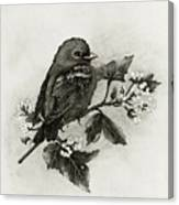 Scarlet Tanager - Black And White Canvas Print