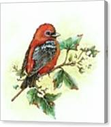 Scarlet Tanager - Summer Season Canvas Print