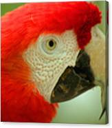 Scarlett Macaw South America Canvas Print