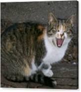 Scary Kitty Canvas Print