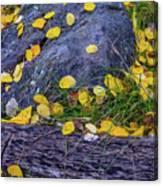 Scattered Aspen Leaves Canvas Print
