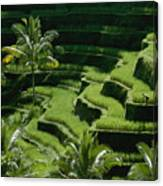 Scenic Valleys With Rice Fields In Bali Canvas Print