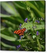 Scenic View Of An Orange Oak Tiger Butterfly Canvas Print