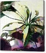 Schefflera Avant Garde Canvas Print