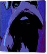 Schnauzer Puppy Poster Canvas Print