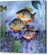 School's Out - Bluegills Canvas Print