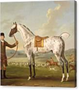 Scipio - Colonel Roche's Spotted Hunter Canvas Print