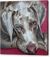 Scooby Weimaraner Pet Portrait Canvas Print