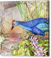 Scooting Coot - Purple Swamphen Canvas Print