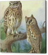 Scops Owl By Thorburn Canvas Print