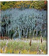 Scorton Creek Treeline Canvas Print