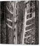Scotopic Vision 4 - Trees Canvas Print