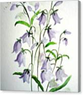 Scottish Blue Bells Canvas Print