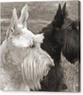 Scottish Terrier Dogs In Sepia Canvas Print