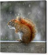Screaming Squirrel  Canvas Print