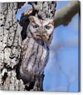 Screech Owl #2 Canvas Print