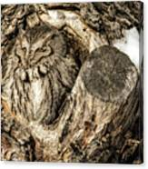 Screech Owl In Cavity Nest Canvas Print