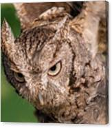 Screech Owl In Flight Canvas Print