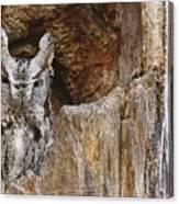 Screech Owl In Hole Canvas Print