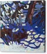 Scrub Red Cedar Canvas Print