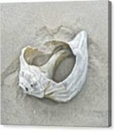 Sculpted By The Atlantic Ocean Canvas Print