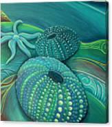 Sea Anemone Kina By Reina Cottier Canvas Print