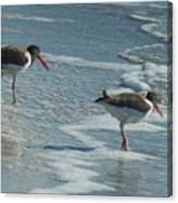 Sea Birds #2 Canvas Print
