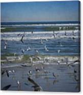 Sea Birds Feeding On Florida Coast Dsc00473_16 Canvas Print