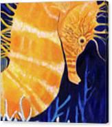 Sea Biscuit Canvas Print