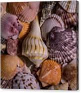Sea Bones 20 Canvas Print