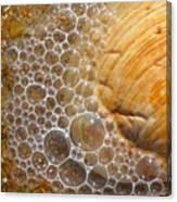 Sea Bubbles Canvas Print