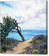 Sea Coast At Half Moon Bay Canvas Print