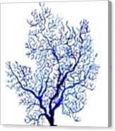 Sea Coral Canvas Print