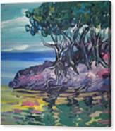 Sea Grapes By Lois Canvas Print